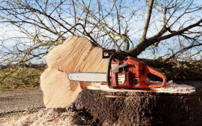 Lavoratori forestali: indennità sempre dovute se il demansionamento è illegittimo